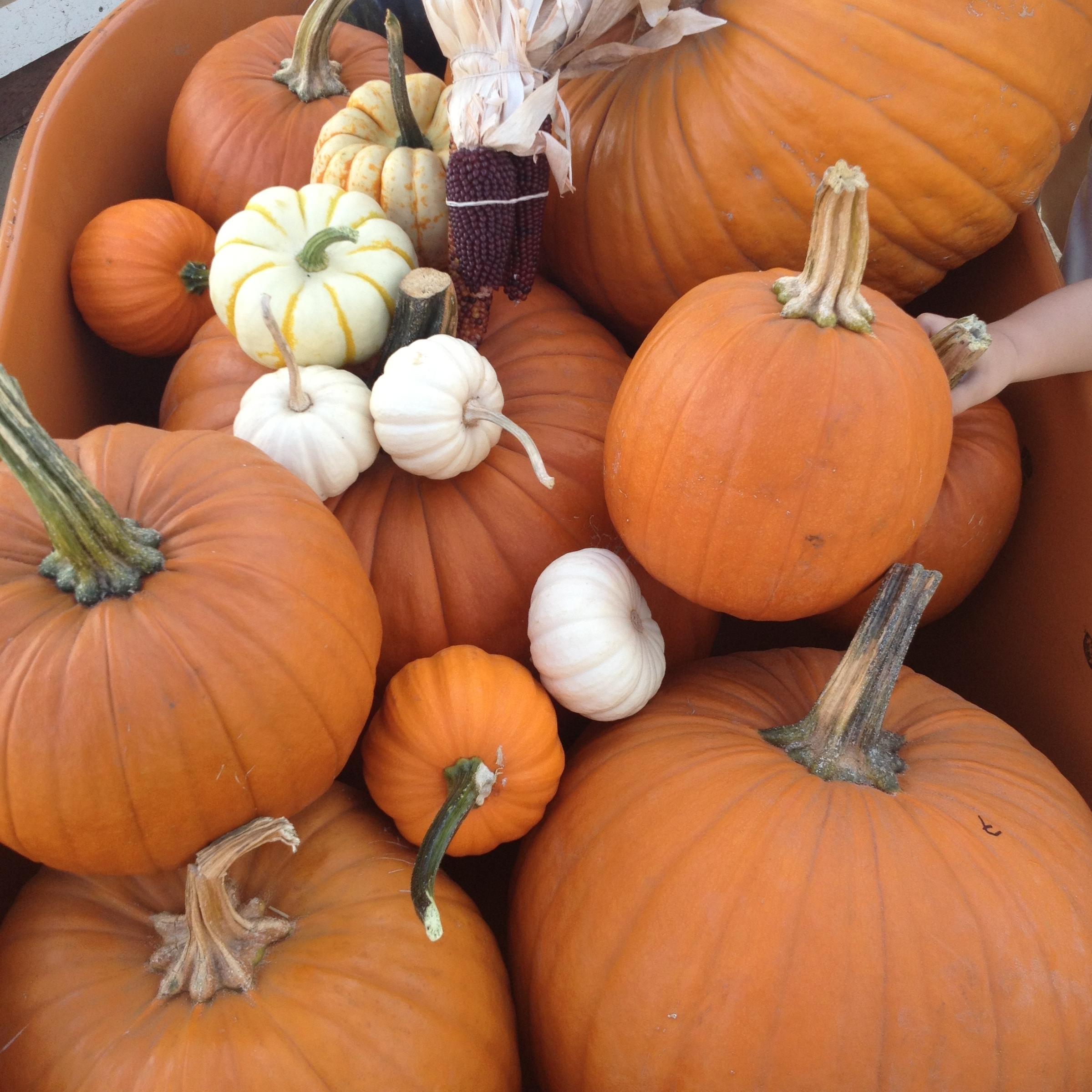 How to make homemade pumpkin puree